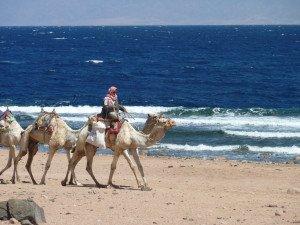 Поездка в Египет - горящие предложения