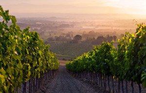 vinogradniki-v-italii