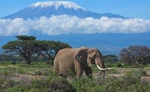 safari-po-zapovednikam-zanzibara