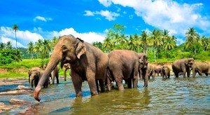 shri-lanka-v-fevrale-tsena