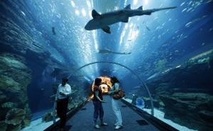 5 бесплатных развлечений в Дубае