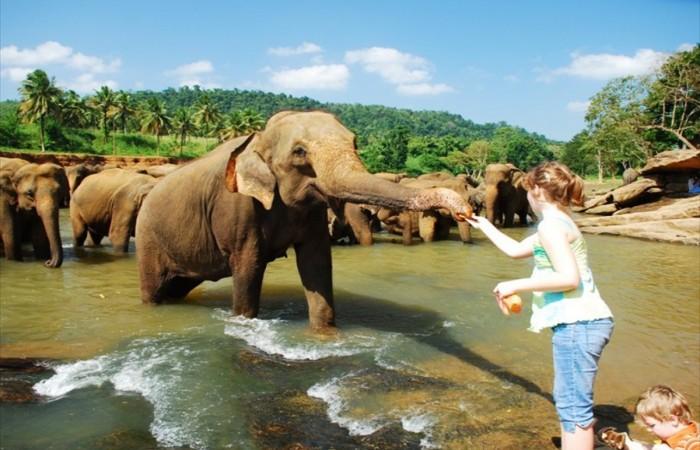 Экскурсионные туры на Шри-Ланку с Харькова